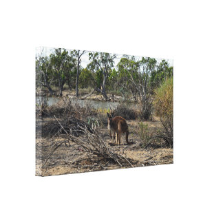 Kangaroo Meanwhile At The Billabong, Canvas Print