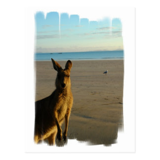 Kangaroo Photo Postcard