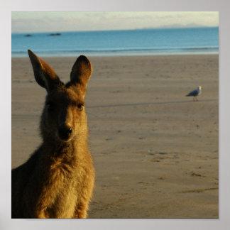 Kangaroo Photo Print
