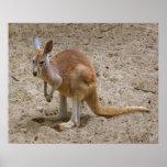 Kangaroo Posters