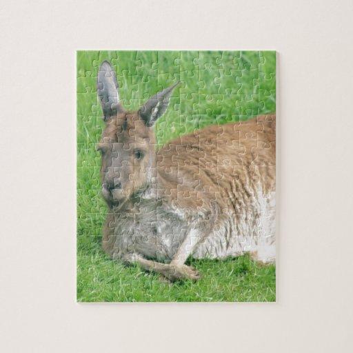 Kangaroo Puzzles