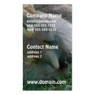 Kangaroo Relaxing Pack Of Standard Business Cards