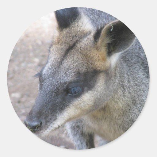 Kangaroo Round Stickers
