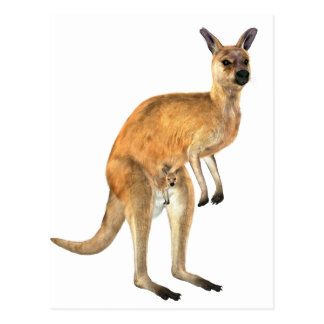 Kangaroo with Baby Joey Postcard