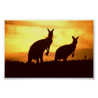 kangaroos at sunset poster