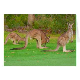 kangaroos card