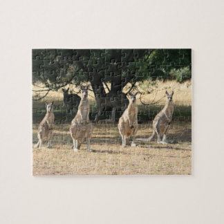 Kangaroos in a Row Jigsaw Puzzles