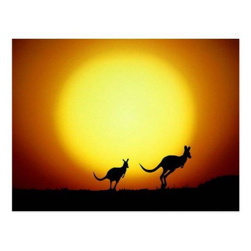 Kangaroos in the Australian Outback Postcard