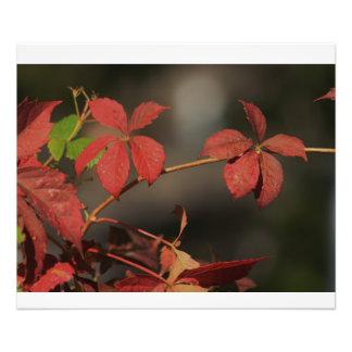 Kansas Country Red vine Photo Art
