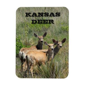 Kansas Deer Photo Magnet