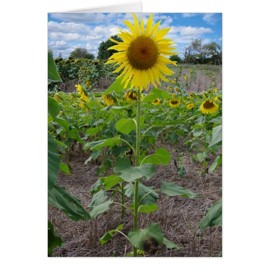 Kansas Flowers Card