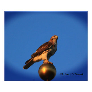 Kansas Hawk on a Flag Pole Photo Enlargement