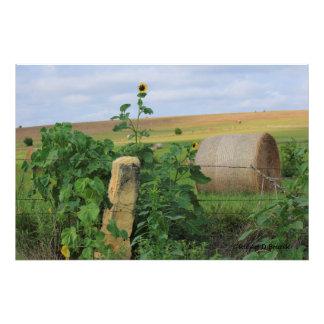 Kansas Stone Post with Sunflower Photo Enlargement