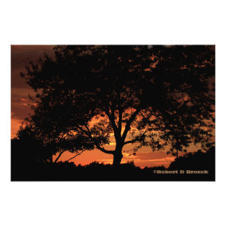 Kansas Sunset Tree Silhouette Photo Enlargement