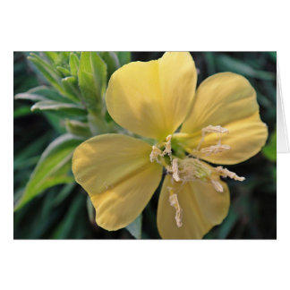 Karte1, map series yellow game flower bloom, in bl greeting cards