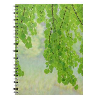 Katsura Tree Limbs in Springtime   Seabeck, WA Notebook