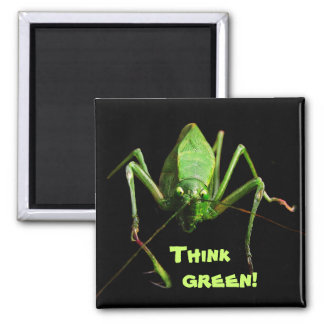 Katydid Think Green Square Magnet