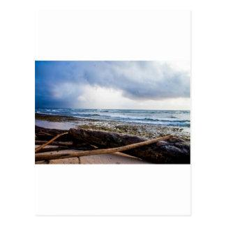 Kauai beach with driftwood postcard
