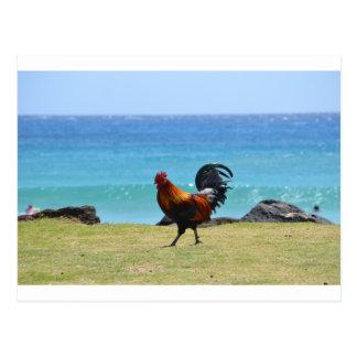 Kauai rooster postcard