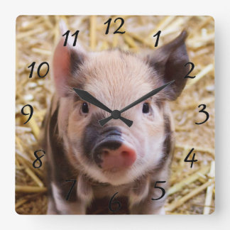 Kawaii cute adorable farm baby piglet pig animal square wall clock