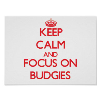 Keep calm and focus on Budgies Print
