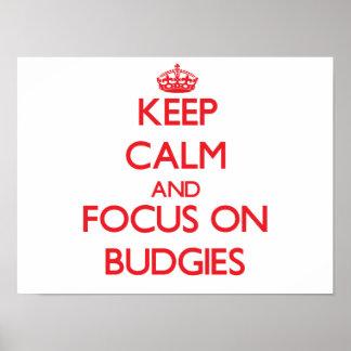 Keep calm and focus on Budgies Print