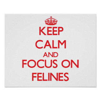 Keep Calm and focus on Felines Posters