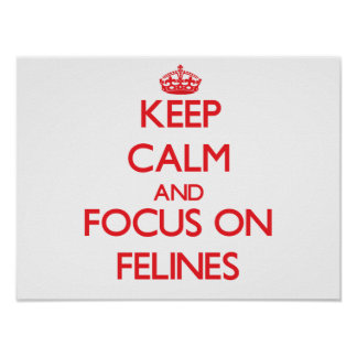 Keep Calm and focus on Felines Poster