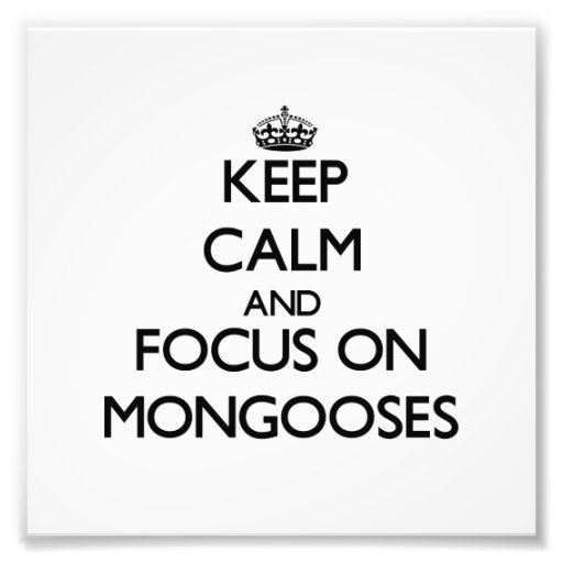 Keep calm and focus on Mongooses Photograph