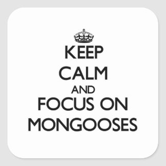 Keep calm and focus on Mongooses Square Sticker