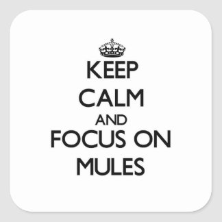 Keep calm and focus on Mules Square Sticker