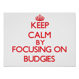 Keep calm by focusing on Budgies Posters