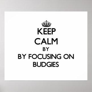 Keep calm by focusing on Budgies Print