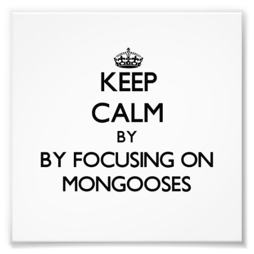 Keep calm by focusing on Mongooses Photographic Print