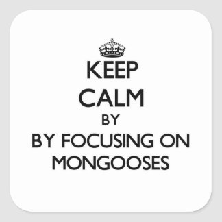 Keep calm by focusing on Mongooses Square Sticker