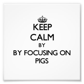 Keep calm by focusing on Pigs Photograph