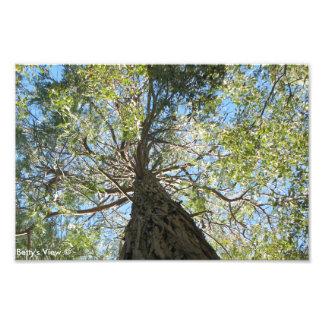 Keep Looking Up- Photo Enlargement