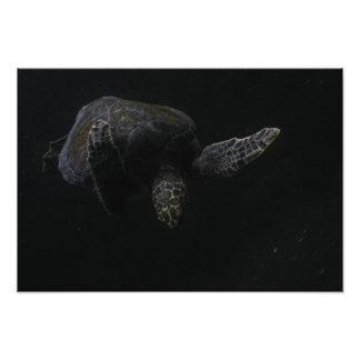 Keep Swimming turtle photo print