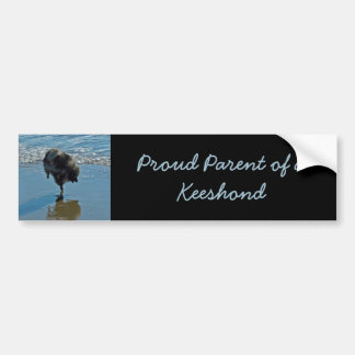 Keeshond Ballet Bumper Sticker