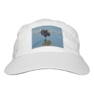 Keeshond Ballet Photograph - Cute Original Dog Art Hat