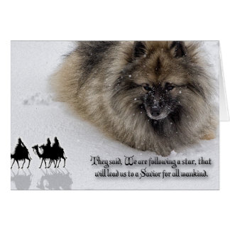 "Keeshond Christmas card ""Three Wise Men"""
