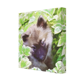 Keeshond Puppy Canvas Print
