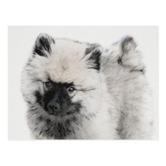Keeshond Puppy Drawing - Cute Original Dog Art Postcard