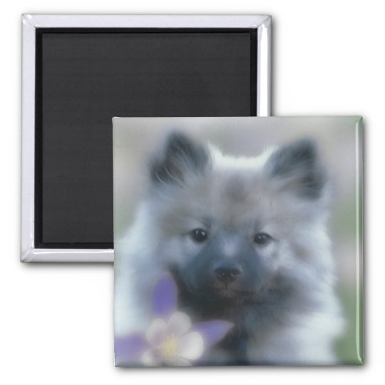 Keeshond with Columbine Square Magnet