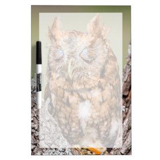 Kendall County, Texas. Eastern Screech-Owl 1 Dry-Erase Whiteboard