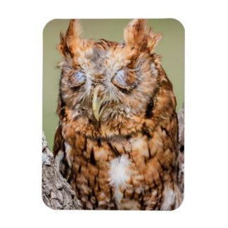 Kendall County, Texas. Eastern Screech-Owl 1 Rectangular Photo Magnet