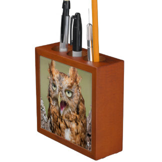 Kendall County, Texas. Eastern Screech-Owl 2 Desk Organisers