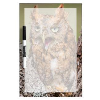 Kendall County, Texas. Eastern Screech-Owl 2 Dry-Erase Boards