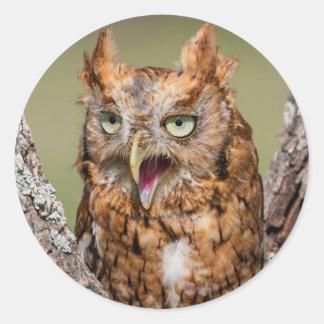Kendall County, Texas. Eastern Screech-Owl 2 Round Sticker