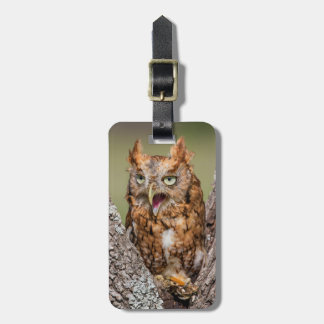 Kendall County, Texas. Eastern Screech-Owl 2 Tag For Bags